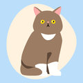 Cat breed cute pet brown fluffy young adorable cartoon animal and pretty fun play feline sitting mammal domestic kitty