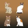 Cat breed cute pet portrait fluffy young adorable cartoon animal and pretty fun play feline sitting mammal domestic