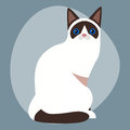 Cat breed siamese cute pet portrait fluffy white black adorable cartoon animal and pretty fun feline sitting mammal
