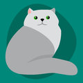 Cat breed siberian cute pet portrait fluffy gray adorable cartoon animal and pretty fun play feline sitting mammal