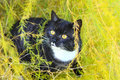 Cat with bright yellow eyes Royalty Free Stock Photography