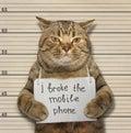 Cat broke phone. Royalty Free Stock Photo