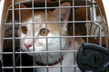 Cat in Cage Carrier Royalty Free Stock Photography