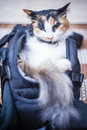 Cat in camera bag view of a resting a Royalty Free Stock Photos
