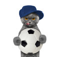 Image : Cat in cap with a ball new playing
