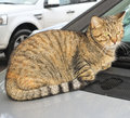 Cat on a car in my town Royalty Free Stock Photography