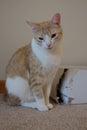 Cat with cardboard box