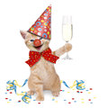 Cat carnival party on white background Stock Image