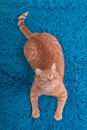 Cat on a Carpet Royalty Free Stock Photos