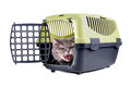 Cat in carrier box angry british shorthair sitting plastic cage on a white background Stock Photography