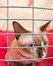 Cat carrier with inside Royalty Free Stock Images