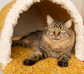 A cat in a cat`s house Royalty Free Stock Photo