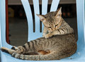 Cat on chair is ducked a blue Stock Images