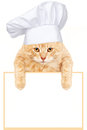 Cat chef with banner. Royalty Free Stock Image