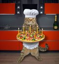 Cat with holiday pizza in kitchen Royalty Free Stock Photo