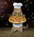 Cat chef with holiday pizza 2