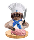 Cat chef isolated on white creative Stock Image
