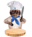 Cat chef isolated on white creative Stock Images