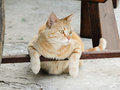 Cat is chilling under a chair resting in funny position Stock Images
