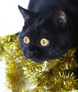 Cat with Christmas ornaments. Stock Photography