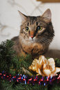 Cat in Christmas Tree Royalty Free Stock Images