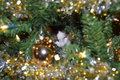Cat in Christmas Tree Royalty Free Stock Photo
