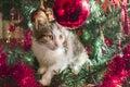 Cat On Christmas Trees