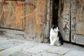 Cat in the city Royalty Free Stock Photo