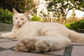 Cat in city ginger sit on ground at park of modern taipei taiwan Royalty Free Stock Image