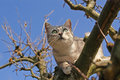 Cat climbing on the tree Stock Image