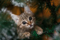 Cat climbing on a tree new year Stock Images