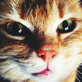 Cat closeup portrait Royalty Free Stock Images