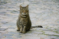 Cat on cobblestones Royalty Free Stock Photo