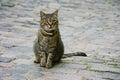 Cat on cobblestones pet sitting european Stock Photo