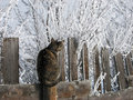 Cat on a Cold Plank Fence Royalty Free Stock Images