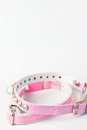Cat collar Stock Image