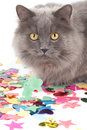 Cat with coloured decoration for party Stock Photography