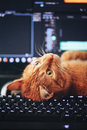 Cat on Computer Keyboard Royalty Free Stock Photo