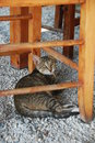 Cat from crete greece island Stock Images