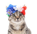 Cat in the crown. Royalty Free Stock Photo