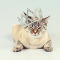 Cat crowned diadem Royalty Free Stock Photo