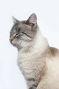 Cat cute on the white background Royalty Free Stock Photos