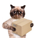Cat delivery post box Royalty Free Stock Photo