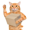 Cat delivery post box. Royalty Free Stock Photo