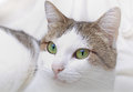 Cat detailed closeup view of a beautiful shot in studio Royalty Free Stock Image