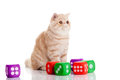 Cat with dices isolated on white backgroud toy play big eyes playing pet domestic animal beauty Stock Photos