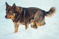 Cat and dog are best friends outdoors in the snow Royalty Free Stock Photo