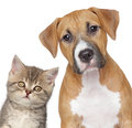 Cat and dog. Close-up portrait Stock Images