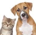Cat and dog. Close-up portrait