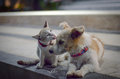 Cat and Dog family. Royalty Free Stock Photo